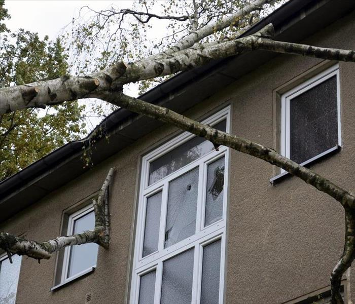 Fallen tree causes broken window