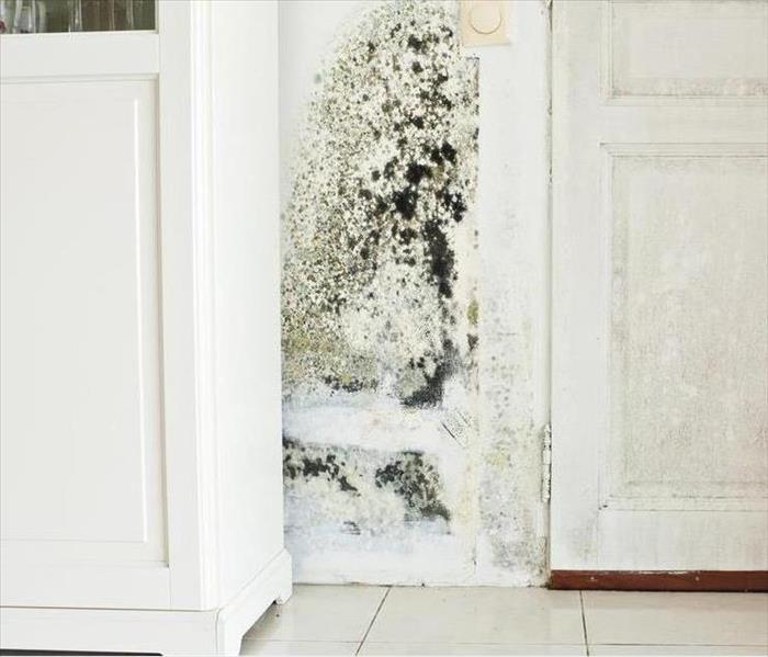 Mold Remediation Mold during cold weather months